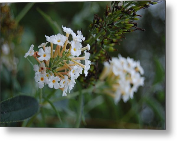 White Flower Metal Print by Beverly Hammond