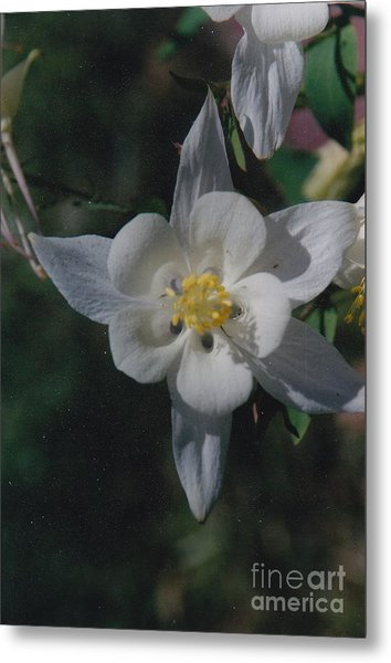 White Flower Splendor Metal Print