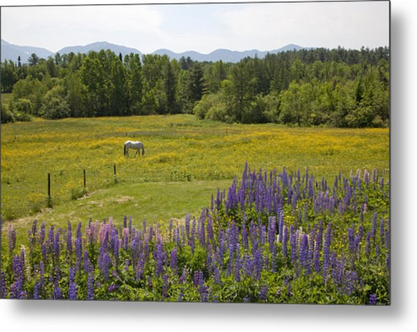White Horse In Yellow Field Metal Print