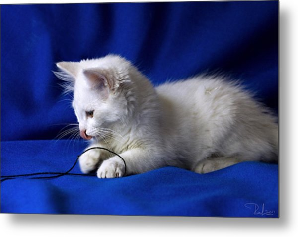 White Kitty On Blue Metal Print