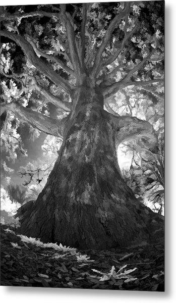 White Oak Metal Print