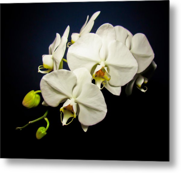 White Orchid IIi Metal Print