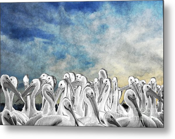 White Pelicans In Group Metal Print