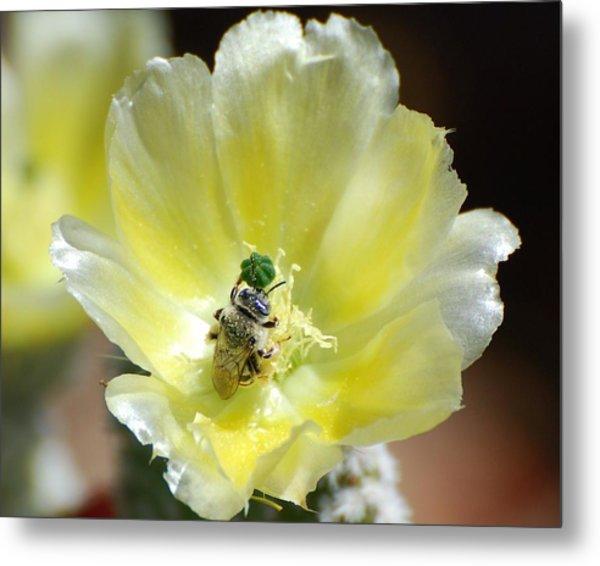White Prickly Bee Metal Print