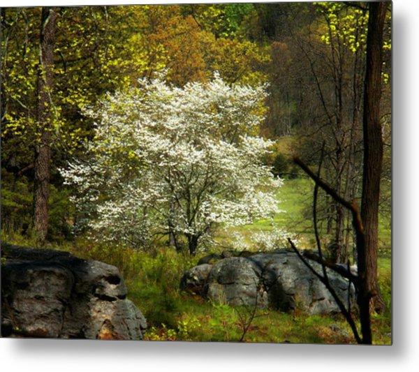 White Tree On The Mountain Metal Print