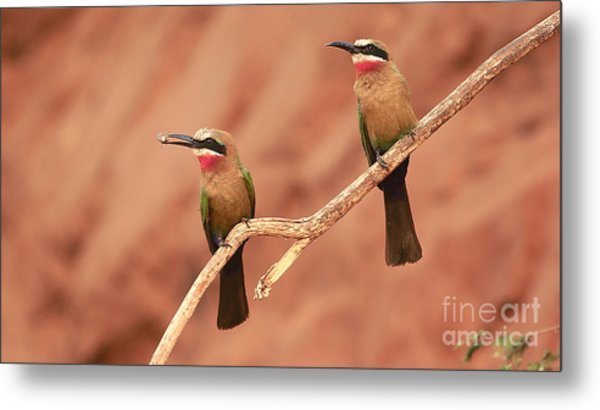 Whitefronted Bee-eaters Metal Print