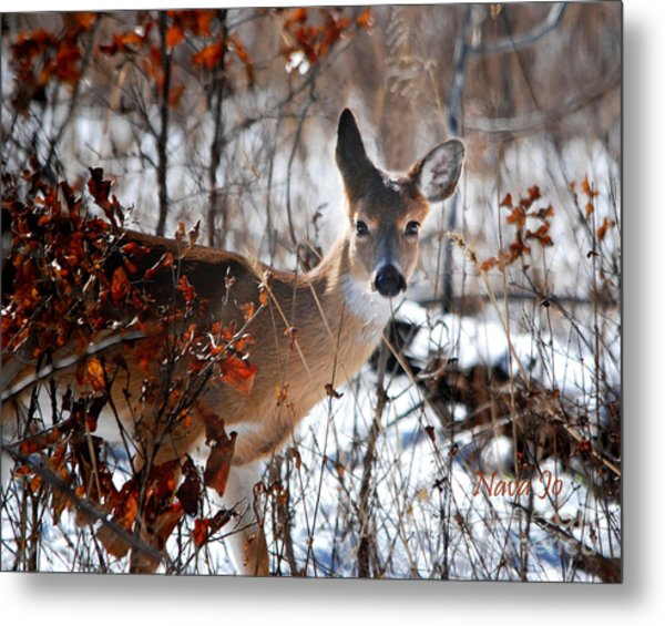 Whitetail Deer In Snow Metal Print