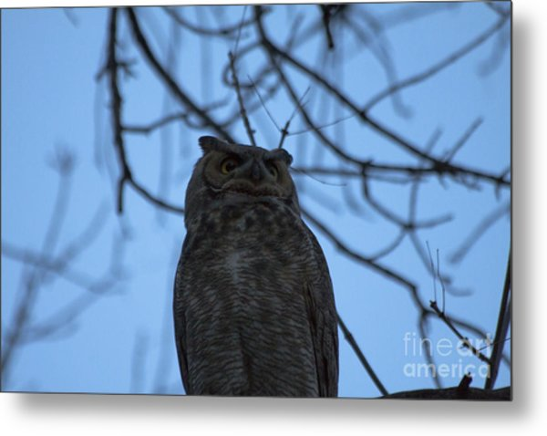 Who 2 Metal Print by Scotts Scapes