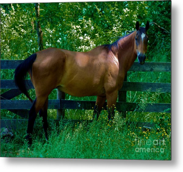 Who You Looking At Metal Print