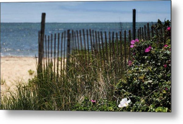 Wild Beach Rose - Cape Cod Metal Print