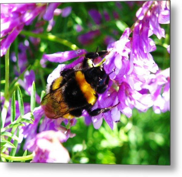 Wild Bee On Flower Metal Print by Andonis Katanos