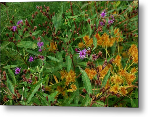 Wild Flowers Metal Print by Beverly Hammond