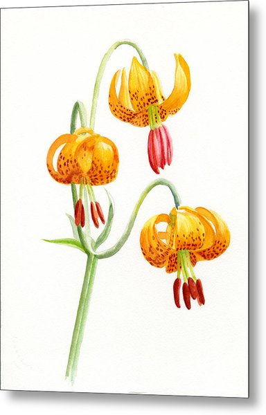 Wild Tiger Lilies Metal Print by Sharon Freeman