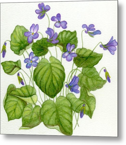 Wild Violets Metal Print by Becky Yates