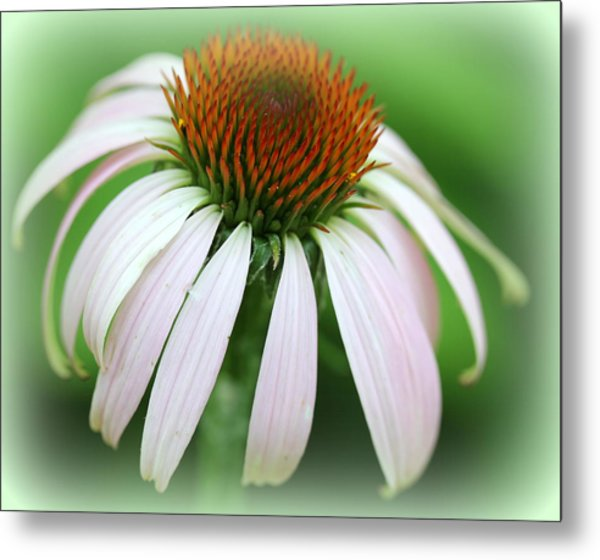 Wildflower In The Park Metal Print by Maureen  McDonald