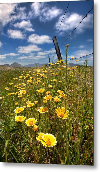 Wildflowers And Barbed Wire Metal Print by Peter Tellone