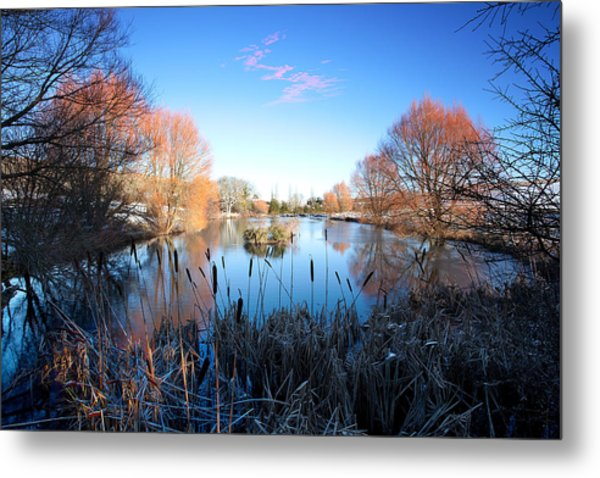 Willow Glow Metal Print by Kris Dutson