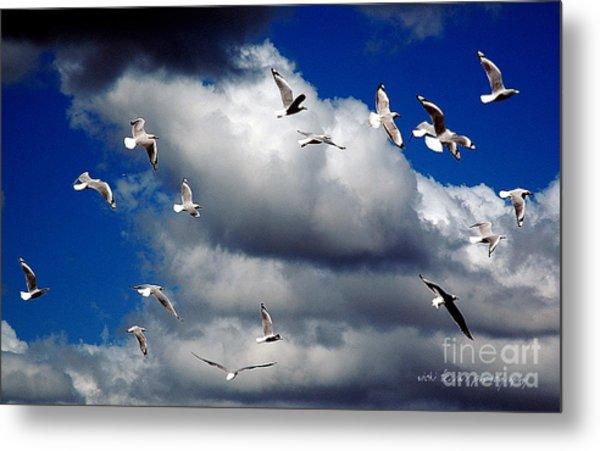 Metal Print featuring the photograph Wind Sailing Seagulls by Vicki Ferrari