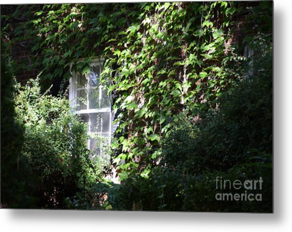 Window And Vines Metal Print