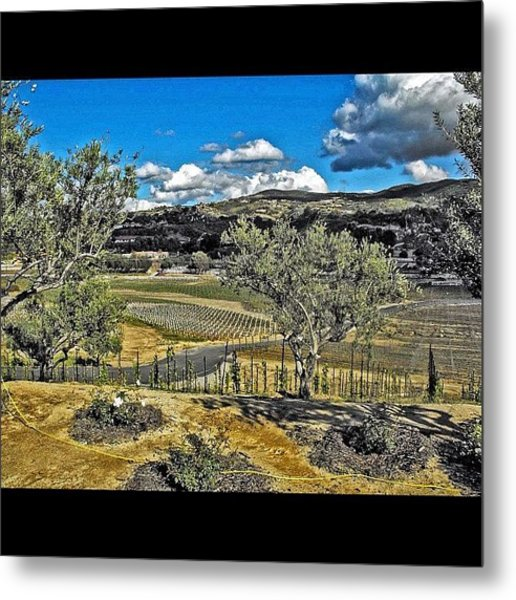 #winery #temecula #photographer #image Metal Print