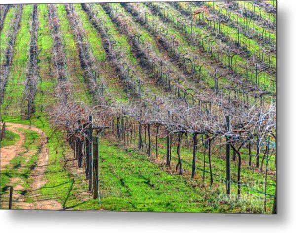 Winery Vineyard Metal Print by Kelly Wade