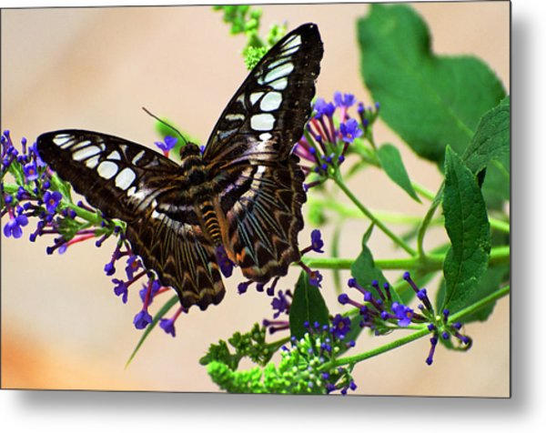 Wing Of Beauty Metal Print by Cheryl Cencich