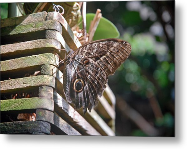 Winged Wood Metal Print