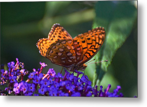 Wings Of Fire Metal Print by Cheryl Cencich