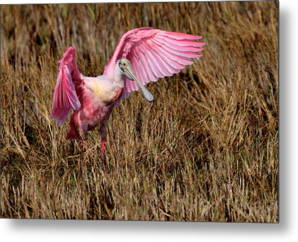 Wings Of Pink And Silk Metal Print