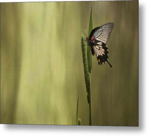 Wings Of The Heart Metal Print