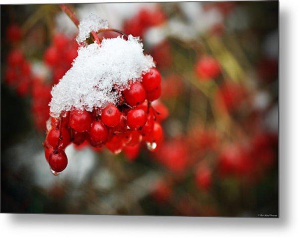 Winter Berries Metal Print