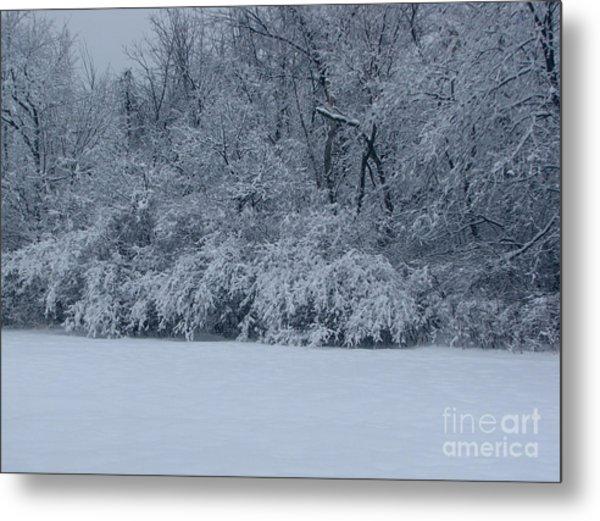 Winter Delight Metal Print by Cedric Hampton