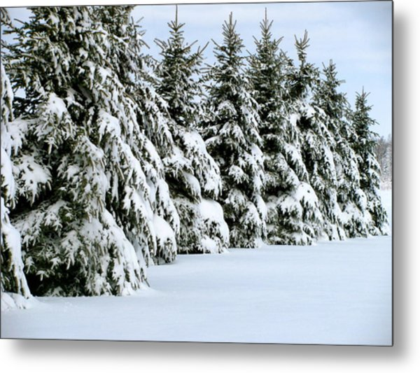Winter Elegance Metal Print