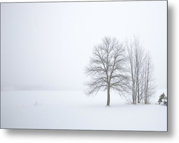 Winter Fog And Trees Metal Print