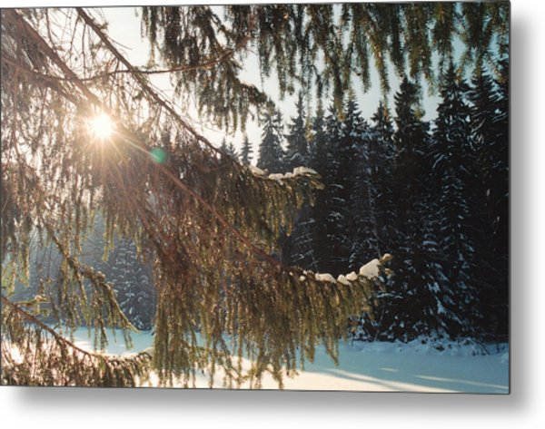 Winter Metal Print by Franz Roth