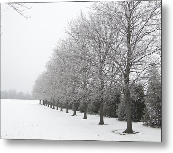 Winter Hoar Frost On Trees Metal Print
