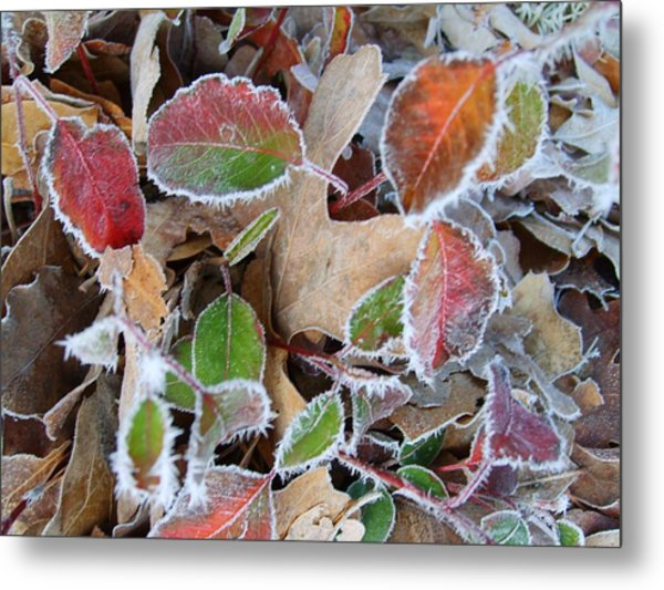 Winter Leaves Metal Print by Linda Pope