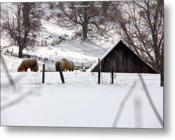 Winter On The Farm Metal Print by Carolyn Postelwait
