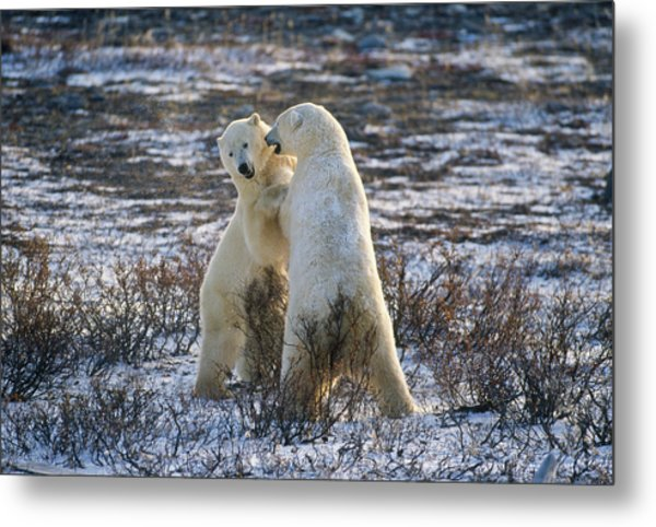 Winter Rumble Metal Print