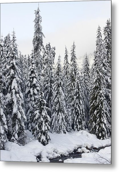 Winter Snow Scene Metal Print