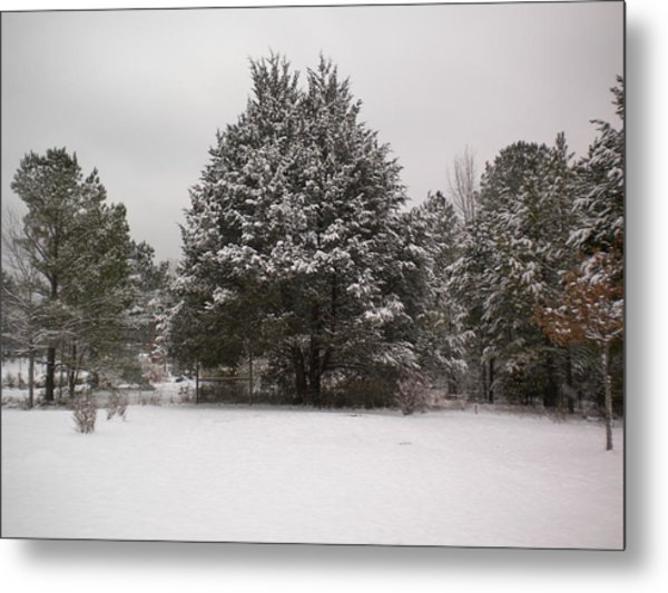 Winter Snow Metal Print by Tessa Priddy
