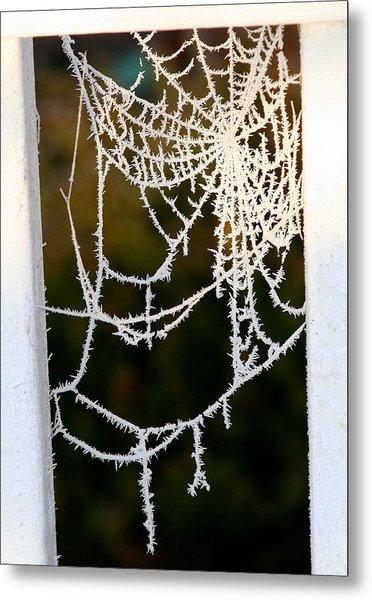 Winter Web Metal Print