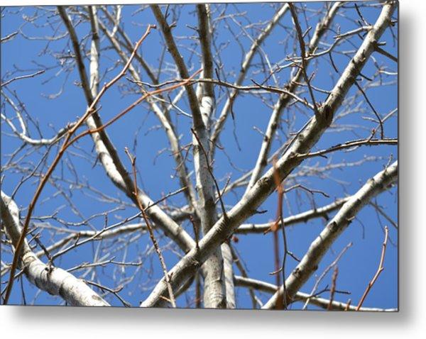 Winter's Branches Metal Print by Naomi Berhane