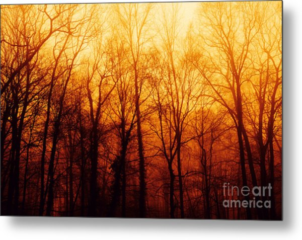 Winters Harvest Metal Print