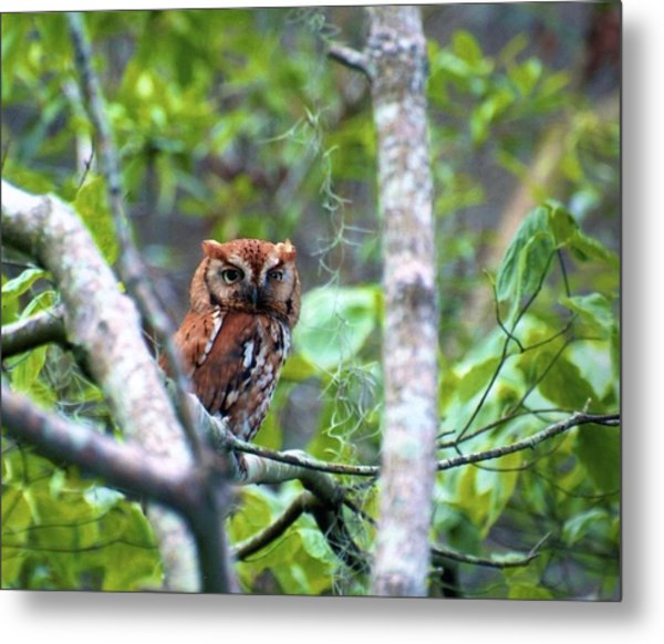 Metal Print featuring the photograph Wise Young Owl by Ralph Jones