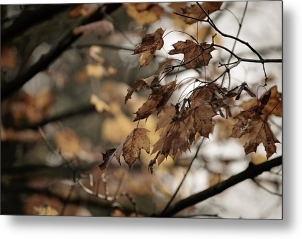 Withered Leaves Metal Print