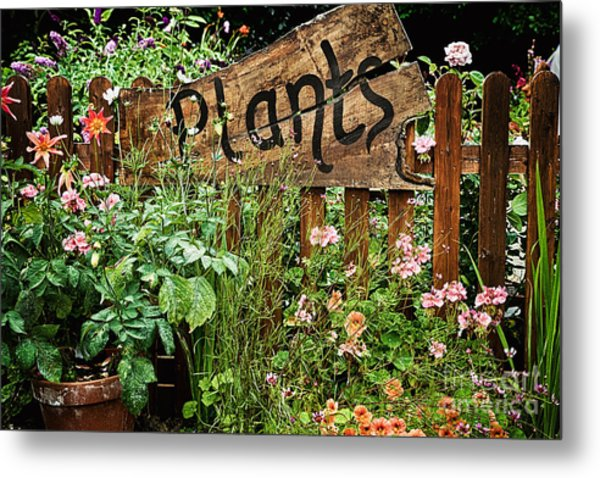Wooden Plant Sign In Flowers Metal Print