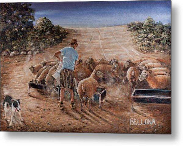 Working Sheep In South-africa Metal Print by Wilma Kleinhans