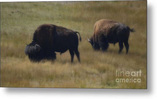 Wyoming Buffalo Metal Print