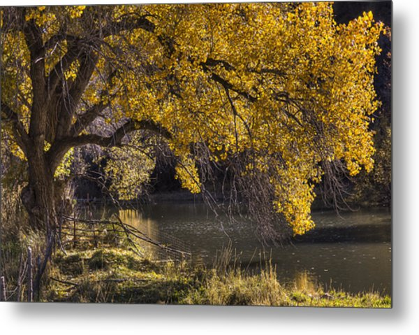 Yell Oh Yellow Metal Print